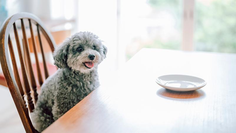 犬が咳をする原因とは?考えられる主な病気と対処法を紹介