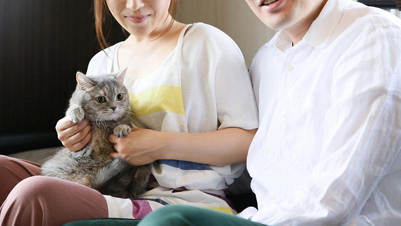 猫がくしゃみをする原因とは?考えられる病気と予防方法を紹介