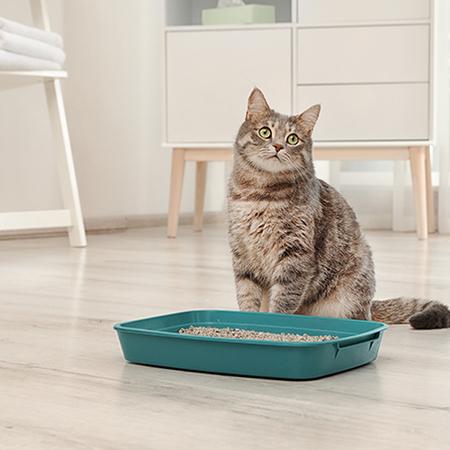 知っておくべき!猫の食欲がない原因と対処方法を紹介